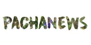 logopachanews
